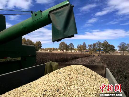 青海藏区推广蚕豆新品种机械化使生产效率提高20倍