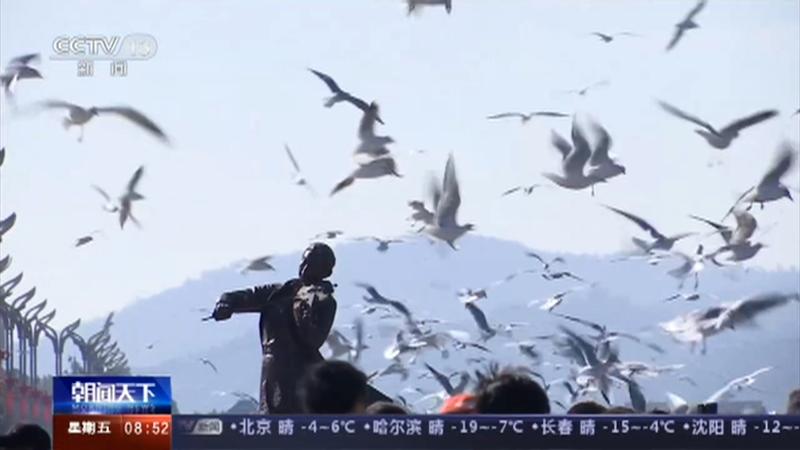 [朝闻天下]云南 3万多只红嘴鸥抵达滇池流域央视网2020年11月27日09:38