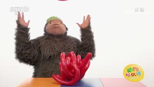 [动物好伙伴]大猩猩时间:章鱼