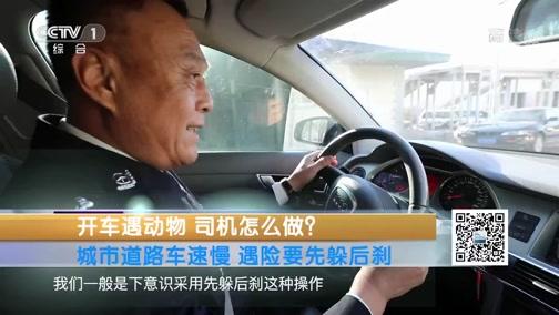 《生活提示》 20200123 开车遇动物 司机怎么做?