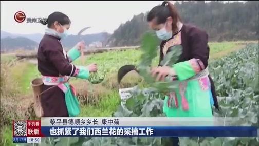 [贵州新闻联播]黎平:坝区蔬菜全面开采