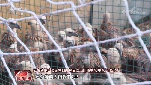[视频]云南施甸破获特大非法猎捕珍贵、濒危野生动物案