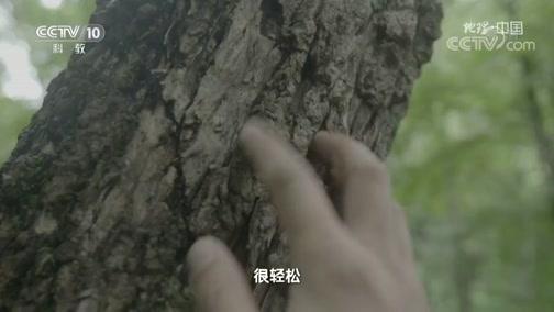 [地理·中国]东北虎留下的痕迹