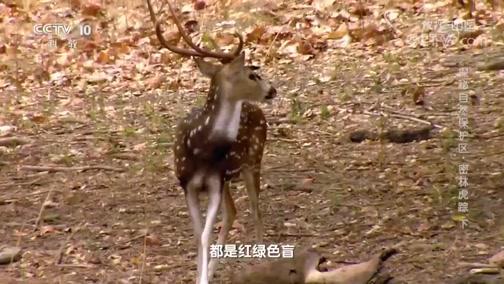 """[地理·中国]老虎专属的""""保护色"""""""
