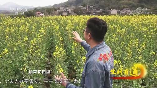 [生财有道]春日踏青 油菜花绽放 来这里赴一场春天的约会