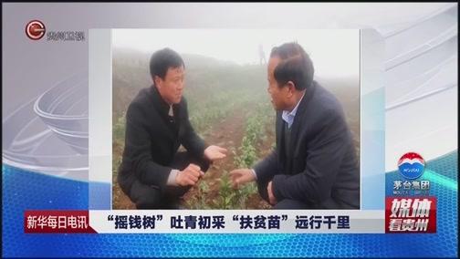 """[贵州新闻联播]媒体看贵州 新华每日电讯:""""摇钱树""""吐青初采 """"扶贫苗""""远行千里"""
