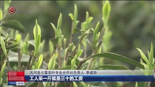 [贵州新闻联播]防疫不误采摘季 贵州多地春茶开采