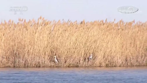 [新闻袋袋裤]内蒙古:额济纳旗湿地迎来候鸟北迁高峰