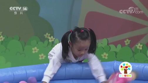 [小小智慧树]西瓜桔子做游戏:海洋池里找拼图