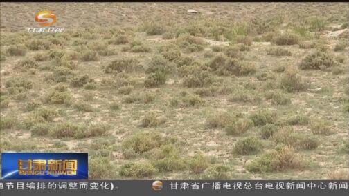 [甘肃新闻]张掖:有害生物防治促进草原生态和经济效益双赢