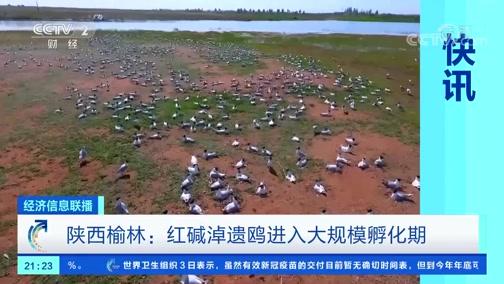 [经济信息联播]快讯 陕西榆林:红碱淖遗鸥进入大规模孵化期