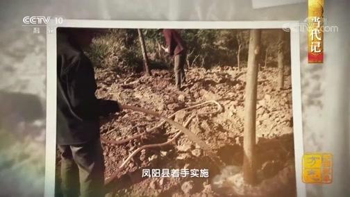 """[中国影像方志]6亿年以上的生存历史 """"水中大熊猫""""桃花水母现身溶洞"""