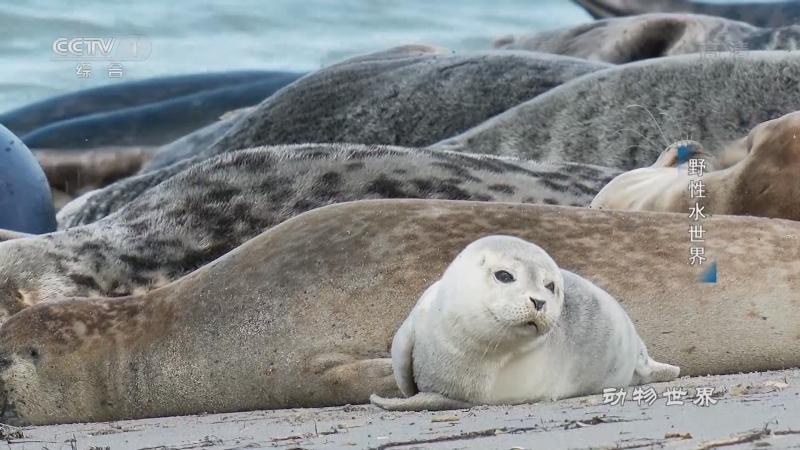 《动物世界》 20210430 野性水世界
