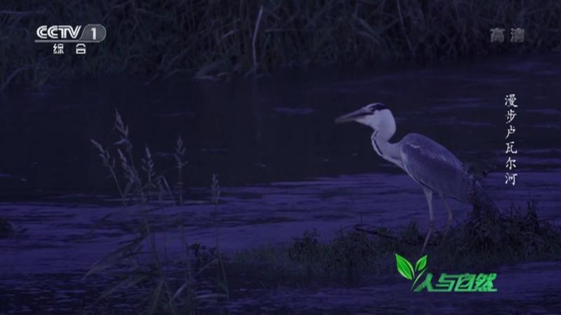 《人与自然》 20210609 漫步卢瓦尔河