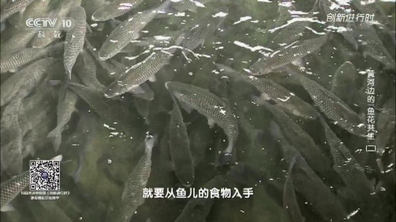 """《创新进行时》 20210624 黄河边的""""鱼花共生""""(二)"""