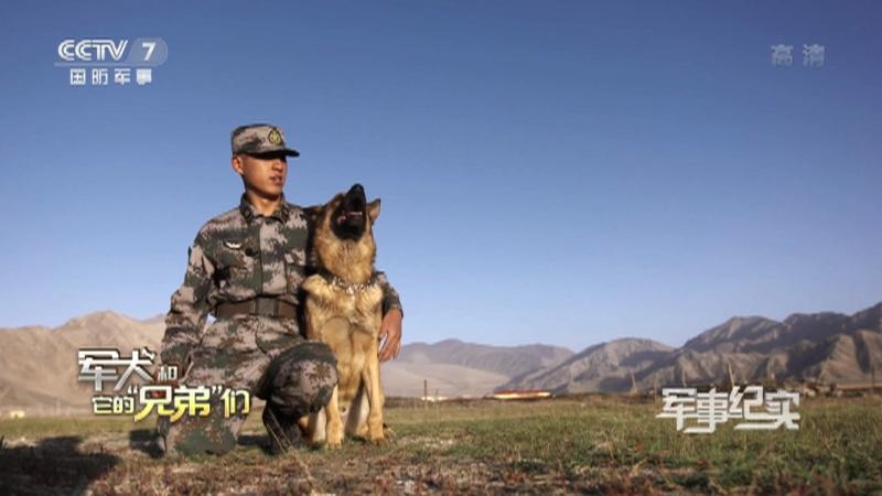 """《军事纪实》 20210729 军犬和它的""""兄弟""""们"""