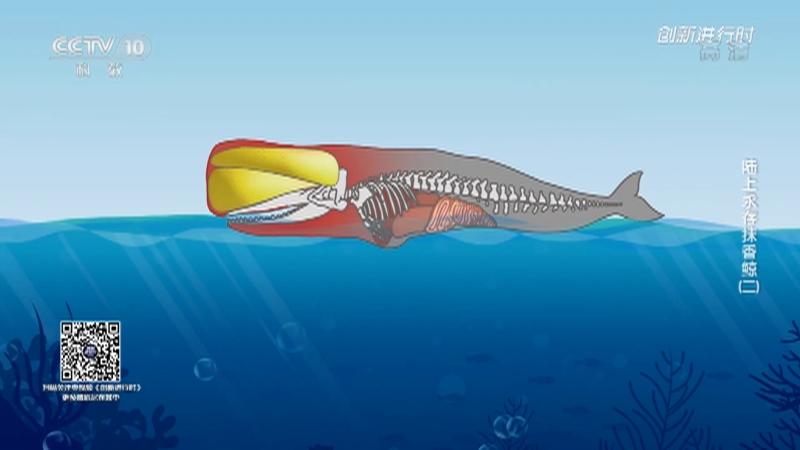 《创新进行时》 20210917 陆上永存抹香鲸(二)