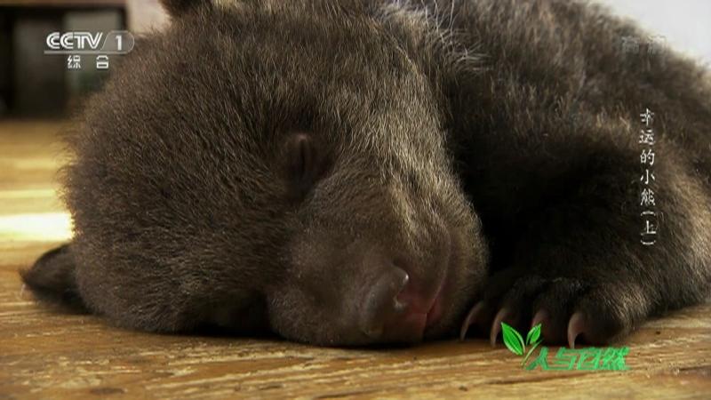 《人与自然》 20210918 幸运的小熊(上)