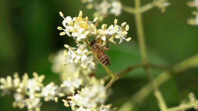《田间示范秀》 20210825 古法养蜂 求蜜有道
