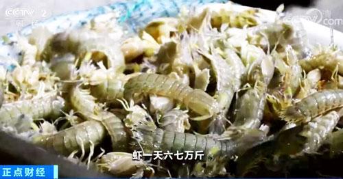 山东威海:不夜的渔港 抢鲜的鱼市