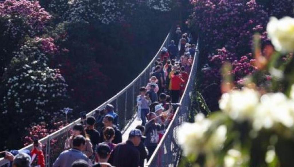 游客在百里杜鹃景区游览