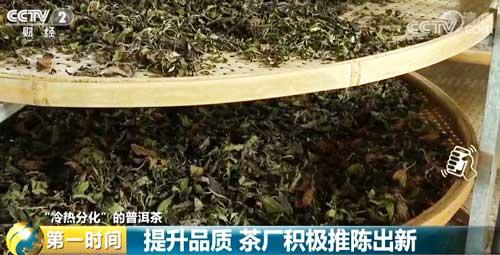 """【""""冷热分化""""的普洱茶】提升品质 茶厂积极推陈出新"""
