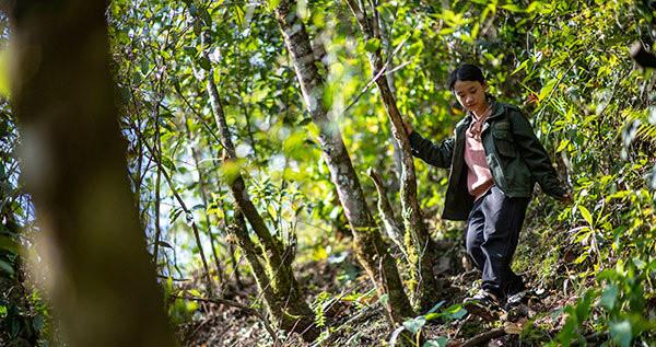云南贡山县独龙江乡巴坡村森林资源管护队小队长木秋云在林间巡护