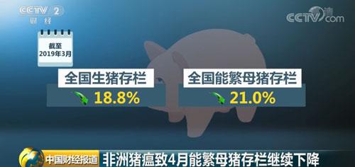 非洲猪瘟致4月能繁母猪存栏继续下降