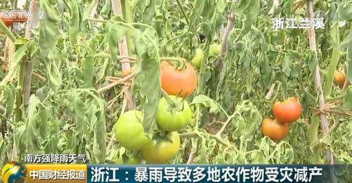 浙江:暴雨导致多地农作物受灾减产