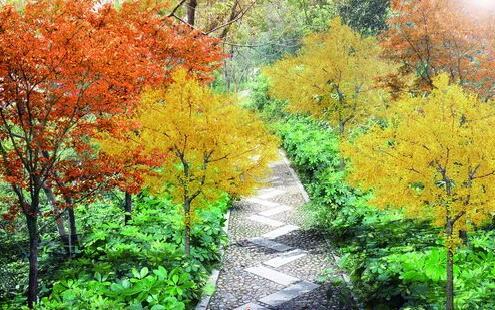 ●仙岳山北二环游步道