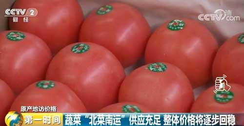"""蔬菜""""北菜南运""""供应充足 整体价格将逐步回稳"""