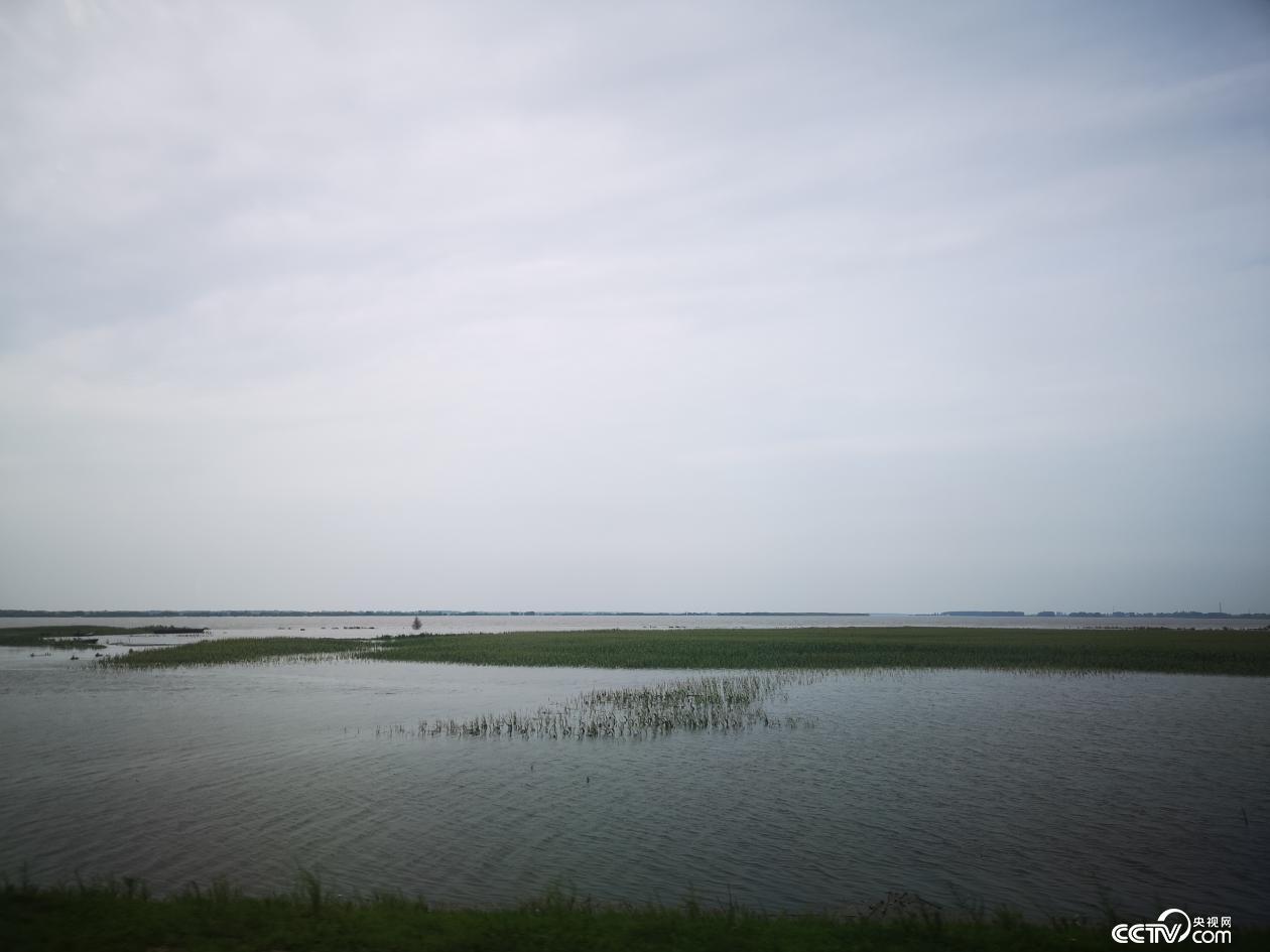 黑龙江边的玉米被淹没(何川 摄)
