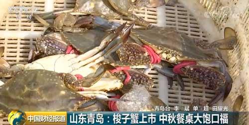 山东青岛:梭子蟹上市 中秋餐桌大饱口福
