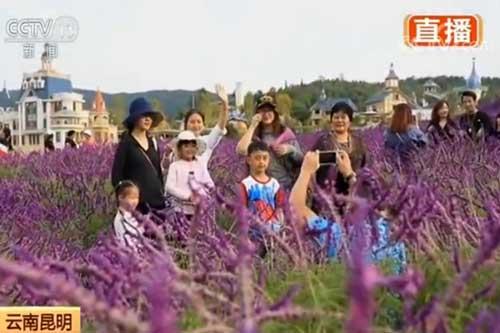 云南昆明:特色小镇赏美景 旅游打卡新选择