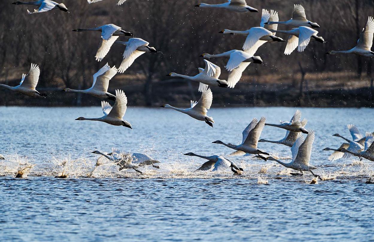 天蓝 水净 鸟飞