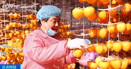 陕西:火红柿子高高挂 产业扶贫双丰收