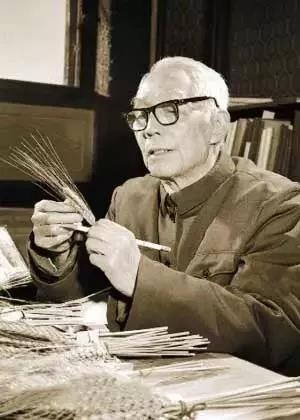 华南农学院老教授在进行稻作研究