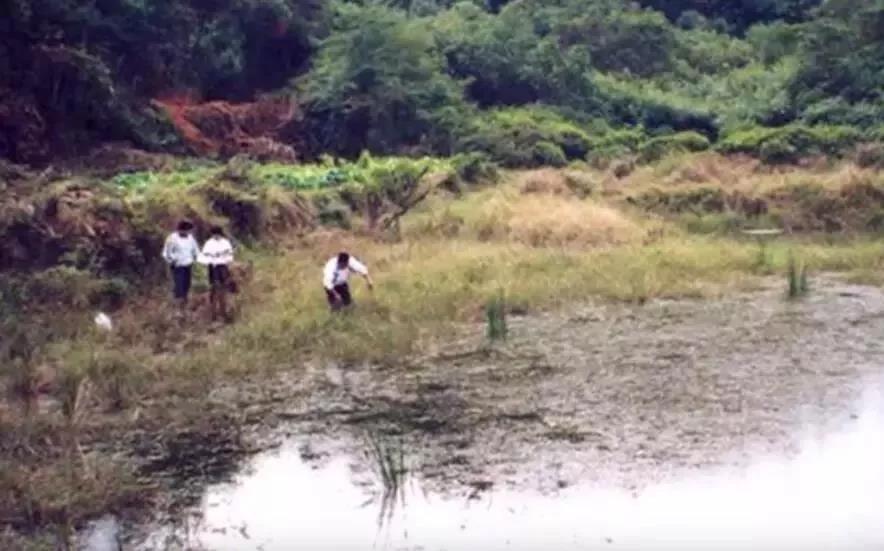 卢永根与学生一起采集野生稻