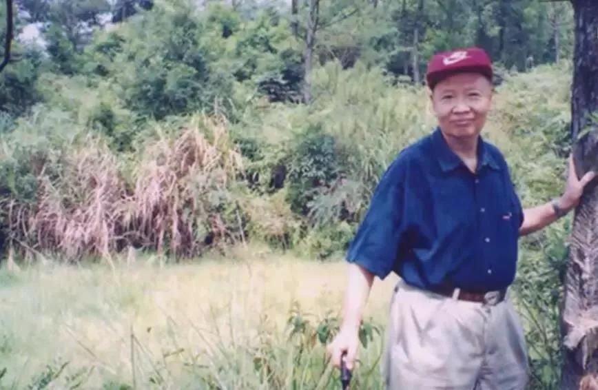 卢永根一手拄拐,一手扶树,见到野生稻很开心