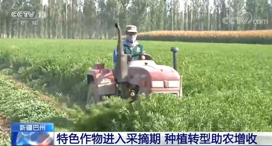 种植作物发展特色产业 拓宽当地农民的增收途径