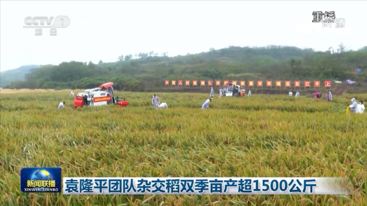 袁隆平团队传来好消息 杂交稻双季亩产超1500公斤