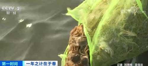 江苏泗洪:春湖水暖放蟹忙 预计3月下旬投放结束