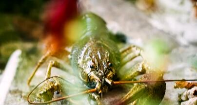 外来物种潜在危害多 常见的外来物种有哪些?