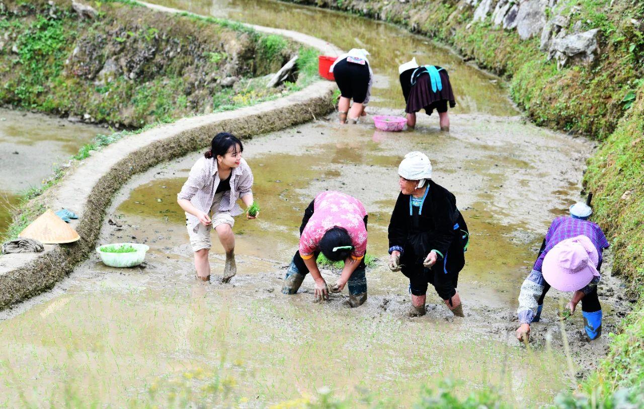 一名驻村干部(左一)与村民一起插秧 杨文斌 摄