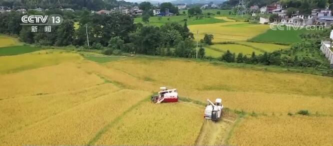 今年以来,农业农村经济稳中加固、稳中向好