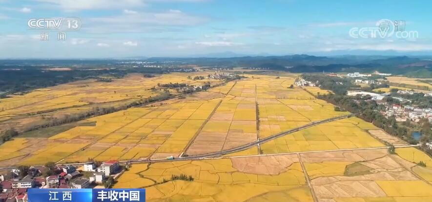 【丰收中国】江西:晚稻开镰收割 丰收美景醉游人